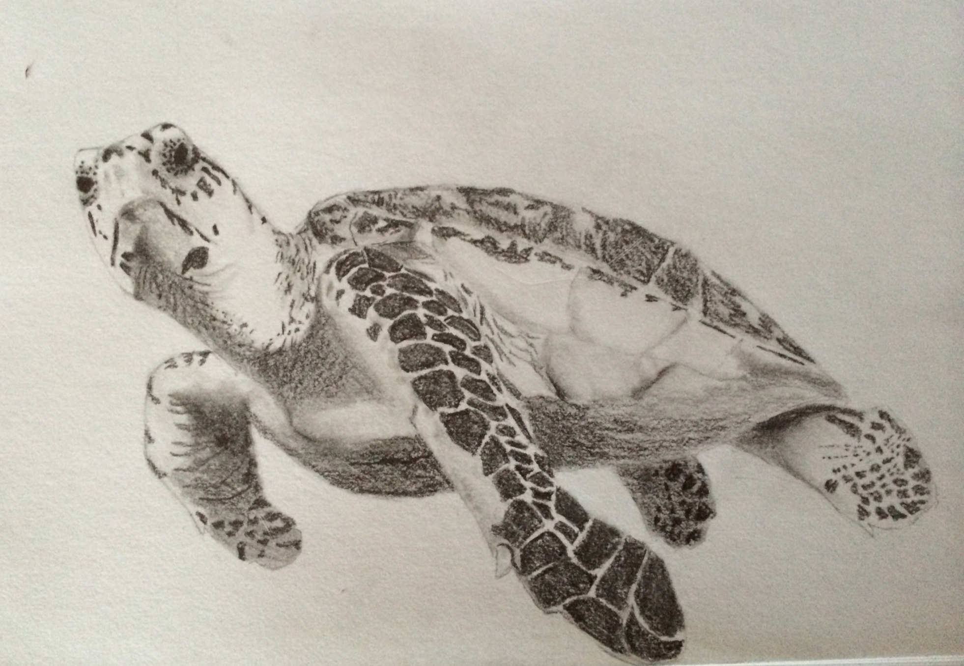 A Turtle Swimming Through The Turmoil Of My Soul
